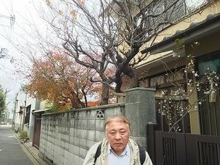 紅葉と桜.JPG